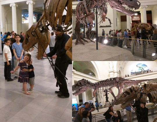 Members Night at the Museum