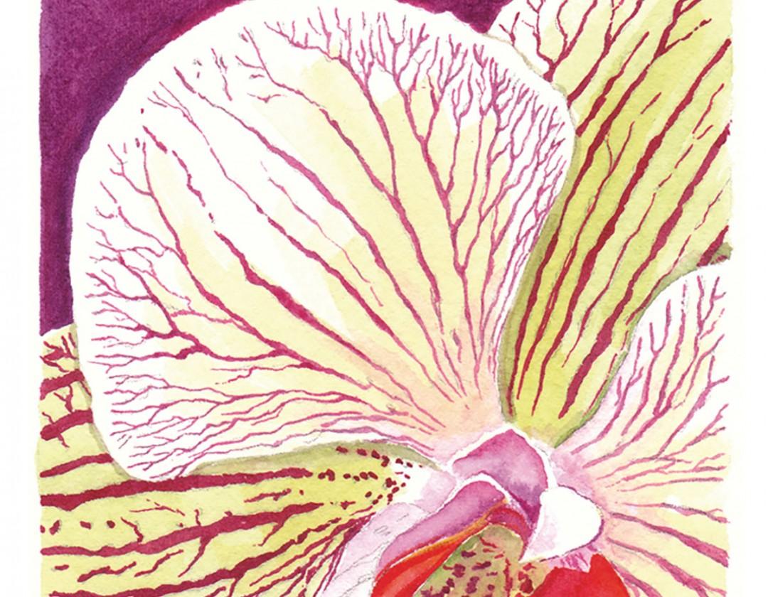 PhalaenopsisBrotherLancer.jpg