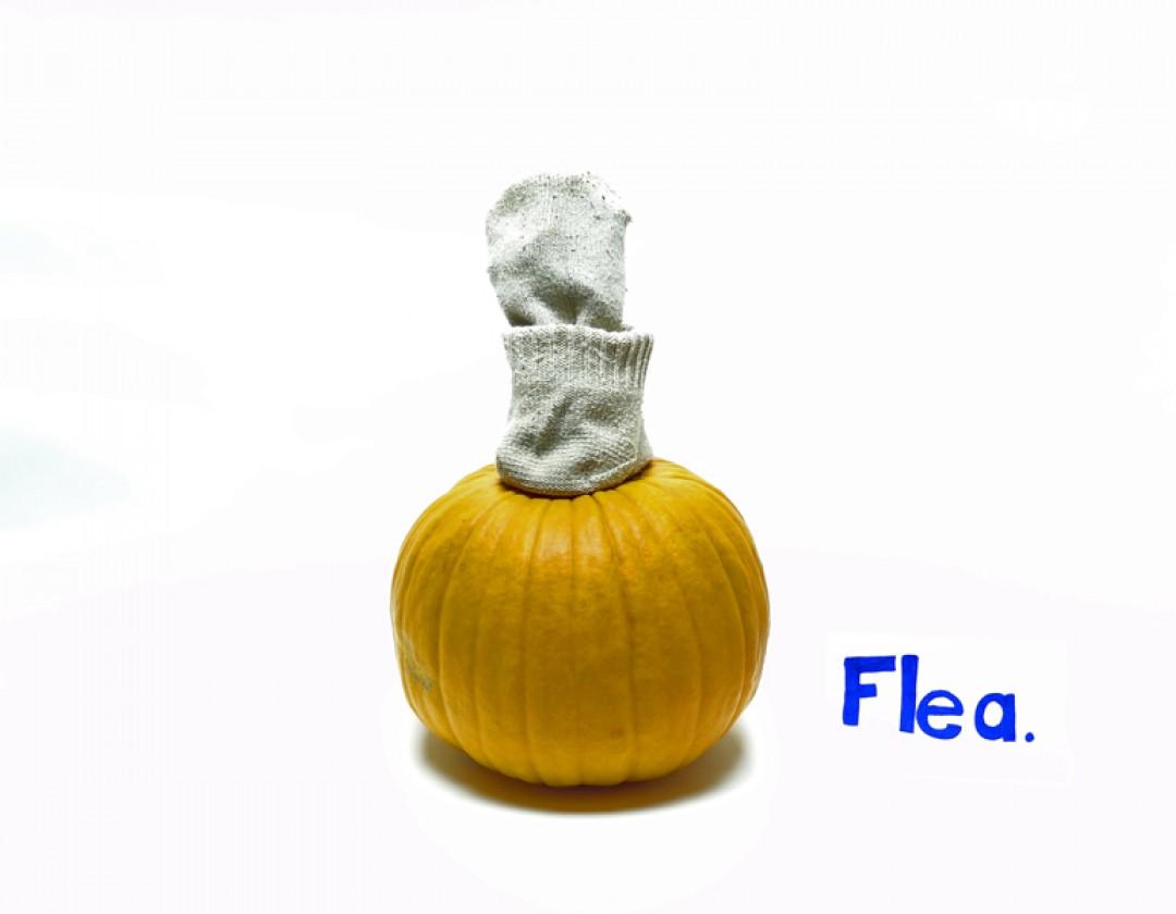 flea-web.jpg